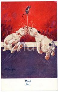 1910 ca ANIMALS Mouse escaping capture by two dogs- Missed - Postcard FP NV