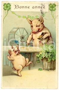 1910 ca BONNE ANNÉE Pigs playing the lottery - Embossed Postcard FP VG