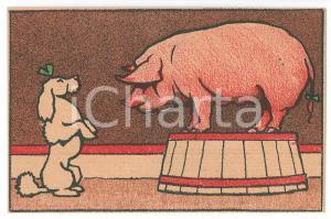 1910 ca CIRCUS Trained poodle and pig ILLUSTRATED Postcard FP NV