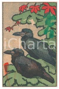 1910 ca ANIMALS Two crows ILLUSTRATED Postcard FP NV - DAMAGED